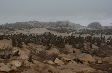 zeeleeuwen Skeleton Coast ©All for Nature Travel