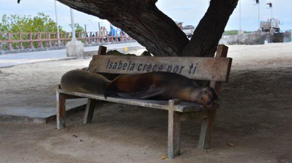 zeeleeuwen op bankje Villamil ©All for Nature