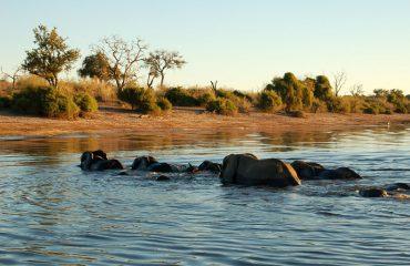Olifanten Okavango