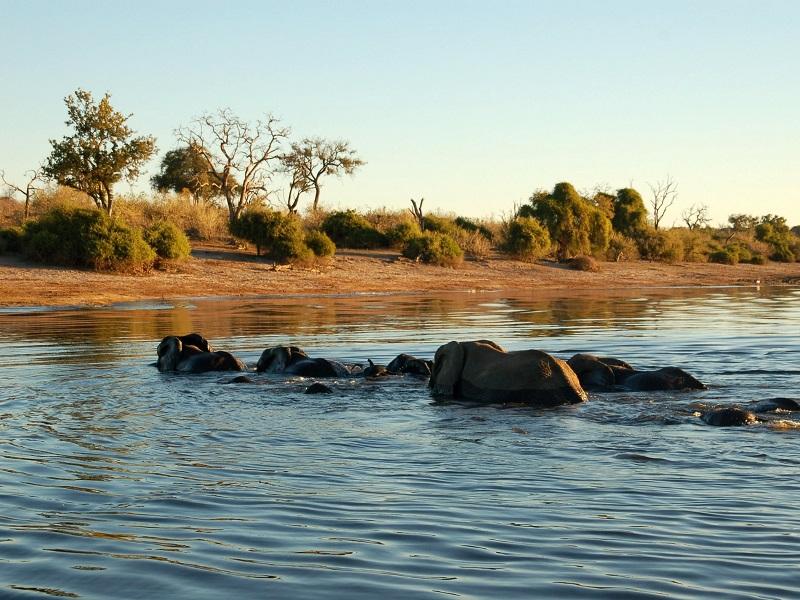 reis Olifanten Okavango