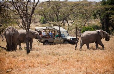 Basecamp game drive