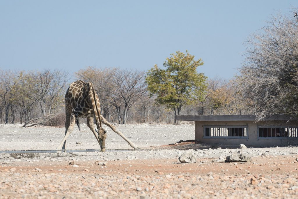 Ongava Anderssons Camp, Ongava, Namibie reis, safari Ongava
