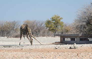 Ongava Anderssons Camp Hide
