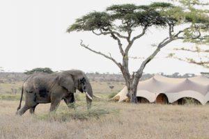 Namiri Plains, Asilia, Serengeti, Safari Tanzania