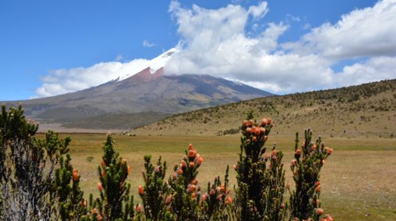 Cotopaxi © All for Nature Travel