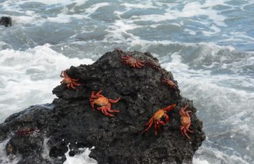 krab Galapagos ©All for Nature Trave