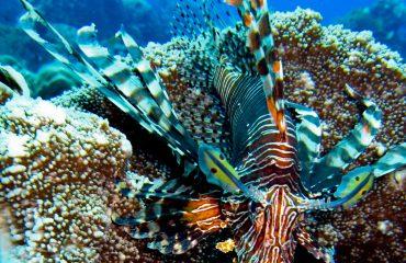 Snorkelen Raja Ampat