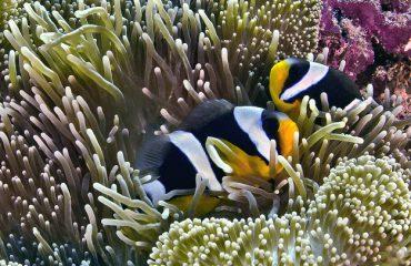 Underwater Raja Ampat ©Gunter Kast