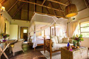 Bwindi Lodge, gorilla trekking, bwindi safari, berggorilla, Vocanoes
