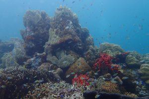kleinschalige lodge Tufi, duiken Papoea