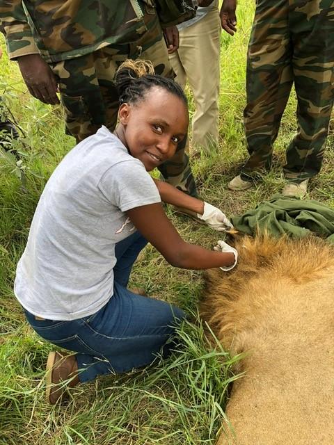 onderzoek leeuwen Kenia