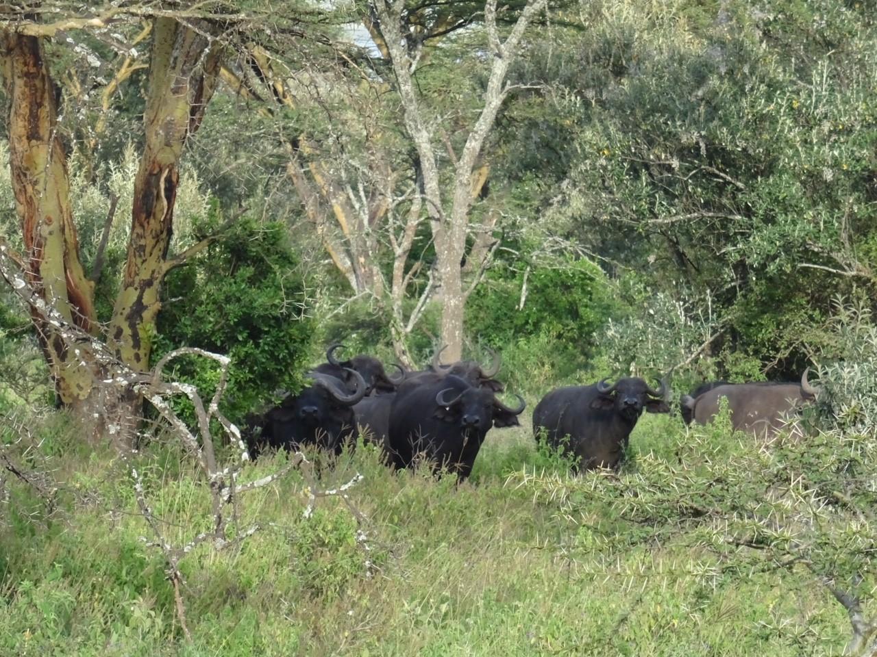 buffels Lake Nakura NP