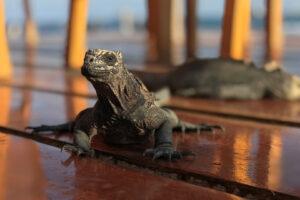 reis Galapagos, Galapagos Santa Cruz, overnachting santa cruz