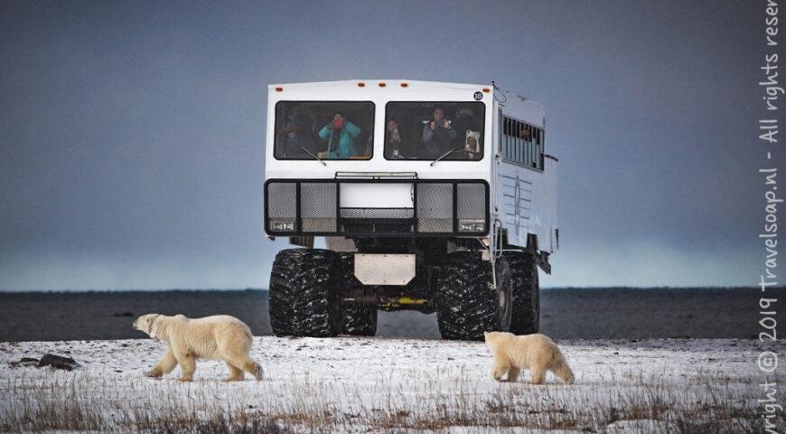 ijsberen voor de Tundra Buggy ©Travelsoap.nl