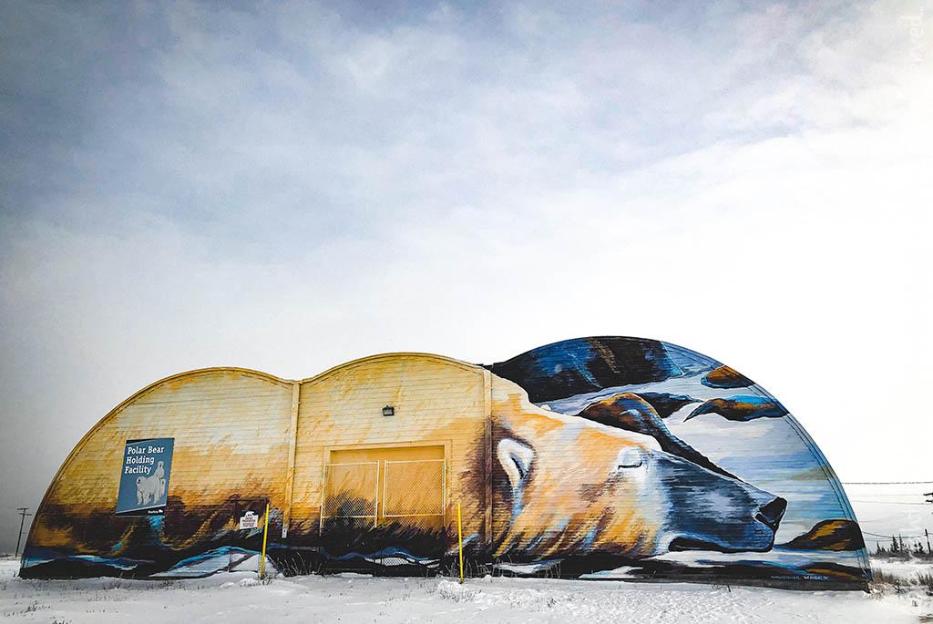 ijsberen, churchill, reis churchill, reis ijsberen, arctisch canada, tundra buggy, frontiers north, polar bear