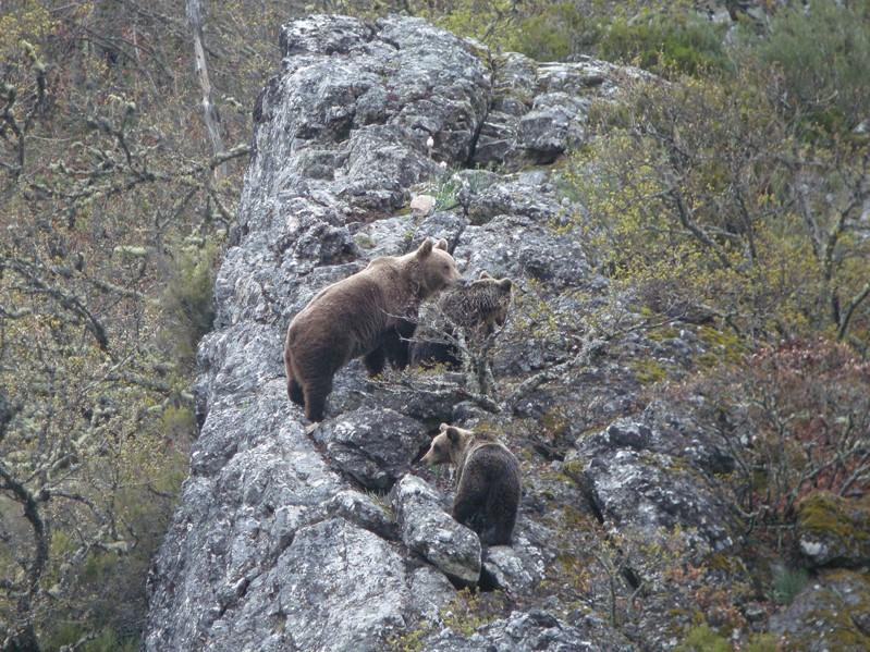 beren reis spanje, reis somedo, beren excursie