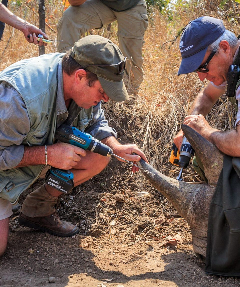 Rhino Conservation Marataba