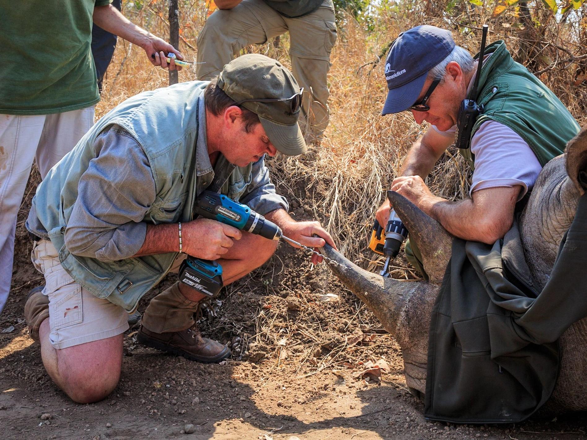 rhino conservation, marataba, reis neushoorn, marataba explorers camp, reis zuid-afrika