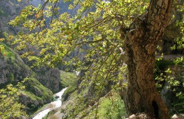 Landschap Asturie Spanje ©Ard Wagenaar