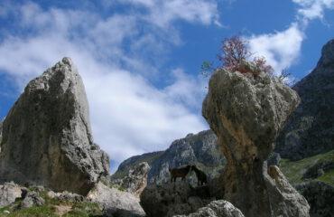 Cantabrisch gebergte Spanje met gemzen ©Ard Wagenaar