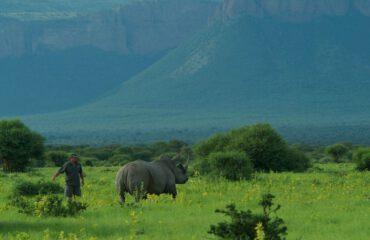 neushoorn conservation marataba