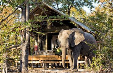 Hyena Pan Safari tent