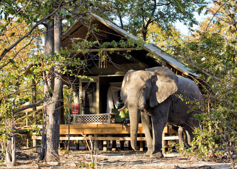Natural Selection, Botswana reis, safari Okavango, safari Khwai safari, safari Okanvango Delta