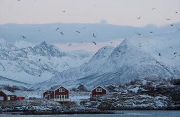 Huisjes aan de Fjorden Noord Noorwegen ©Lea Ponzle