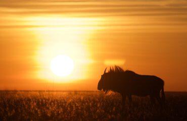 Liuwa sunset Liuwa Plains