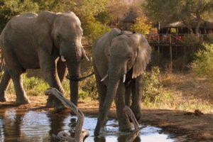 Umlani ,Zuid-Afrika, Kruger NP, safari kruger, Timbavati