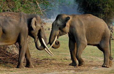 Elephants in Kabini ©EvolveBack