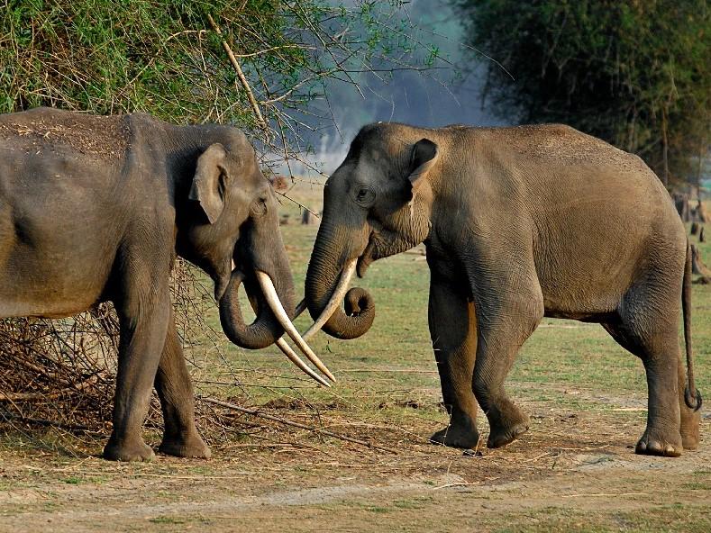 reis india, safari india, reis zuid india, reis western ghats, reis west ghats, wildlife west ghats, wildlife reis india, natuurreis india, Kerala