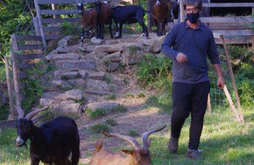Herder in coronatijd  @AllforNatureTravel