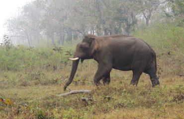 Asiatische olifant Mudumalai National Park